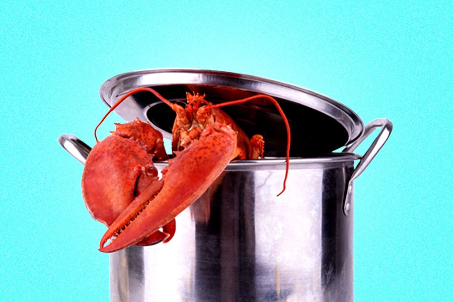 Image result for boiling lobster