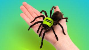 reddit spiderbro