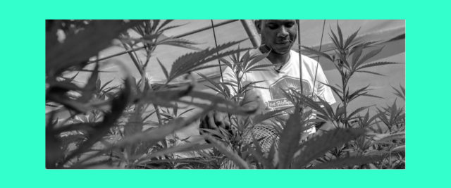 The High Cost of Being a Black Entrepreneur in the Cannabis Industry