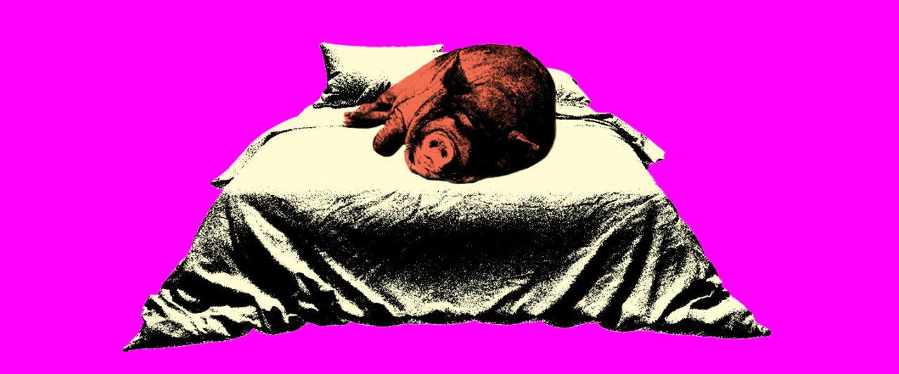 Bed_Hog