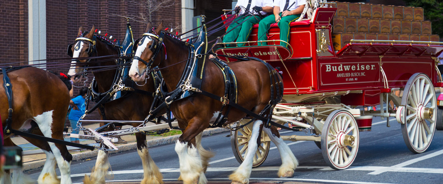 A Brief History Of The Budweiser Clydesdales America S Favorite Super Bowl Icons