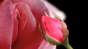 Valentine_Sex