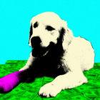 Pet_Insurance