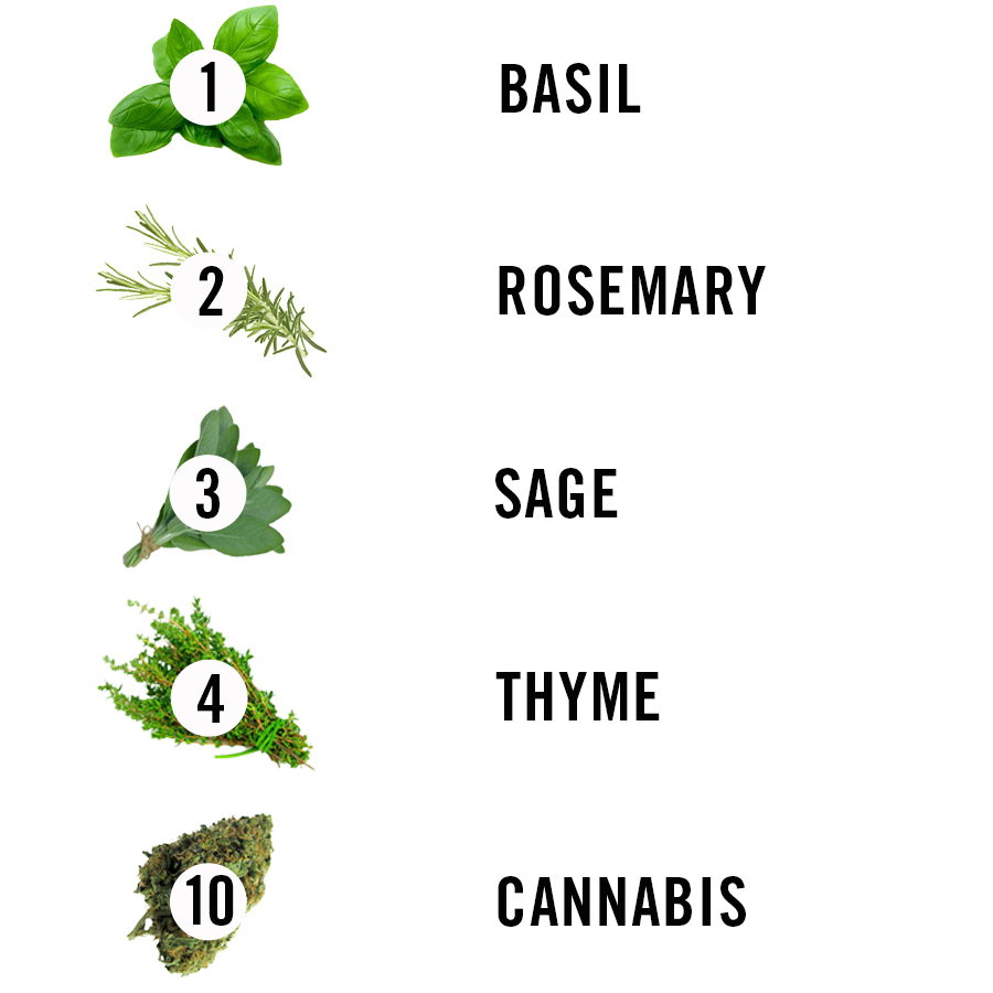 Ranking Herbs by How Healthy They Are | MEL Magazine
