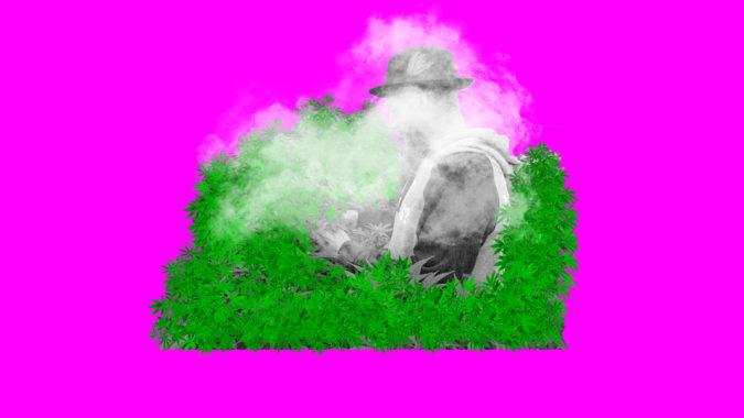 Weed_Tour