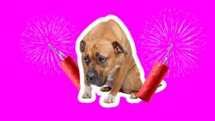BB_Fireworks