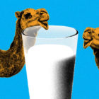 Camel_Milk2