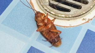 Home_Bugs
