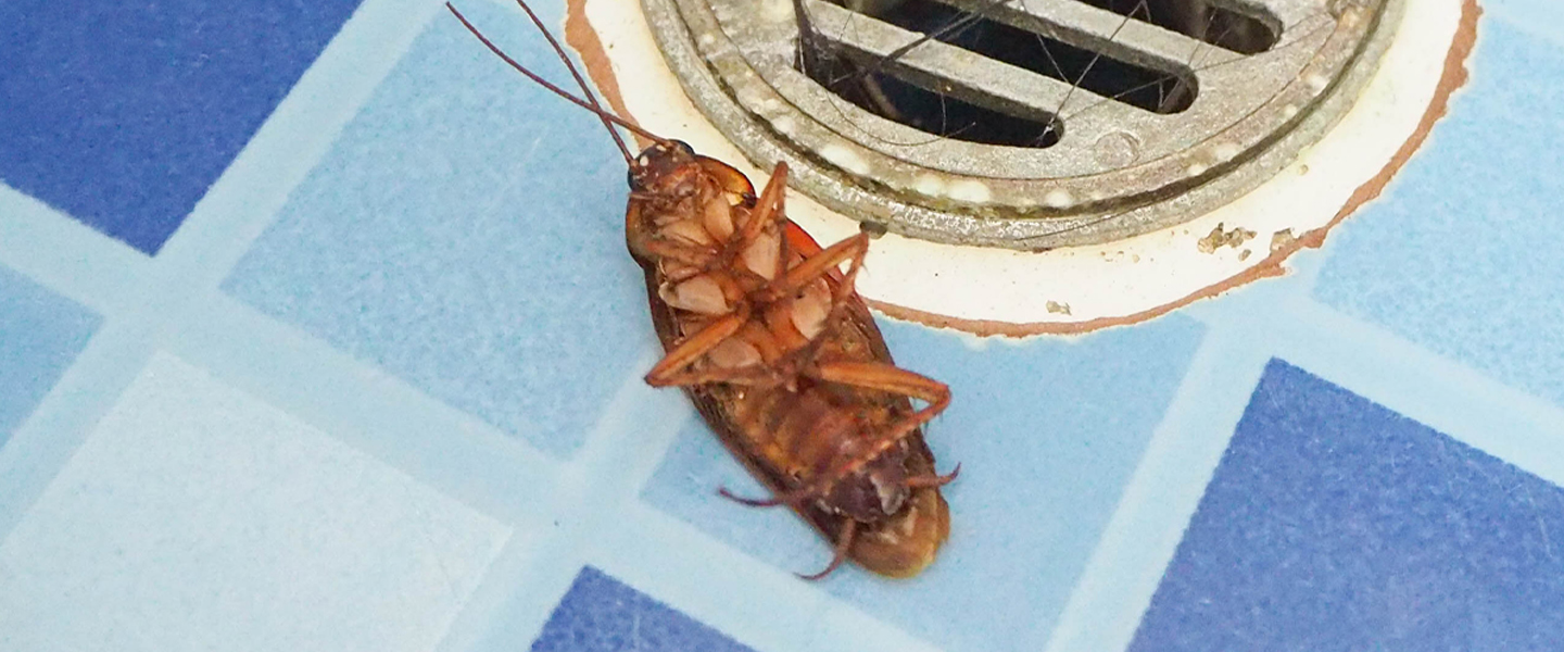 Every Bug in Your House, Ranked by How Worried You Should Be About