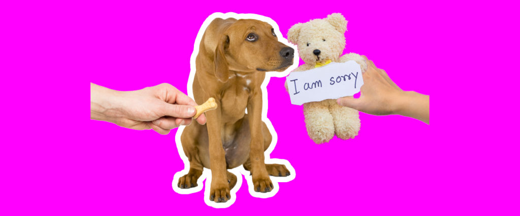 Does My Dog Understand When I Apologize?