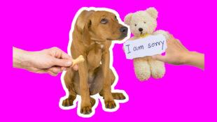 BB_Sorry
