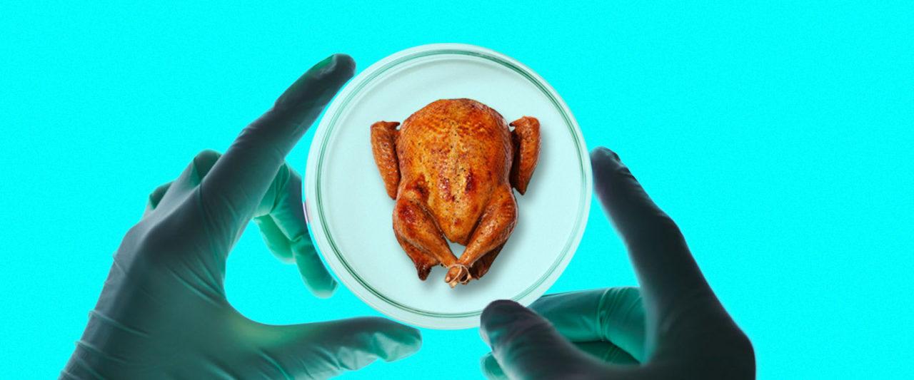 Lab_Turkey