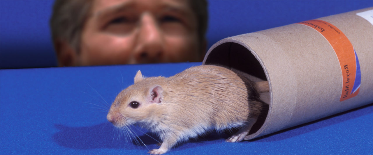 RichardGereGerbil2