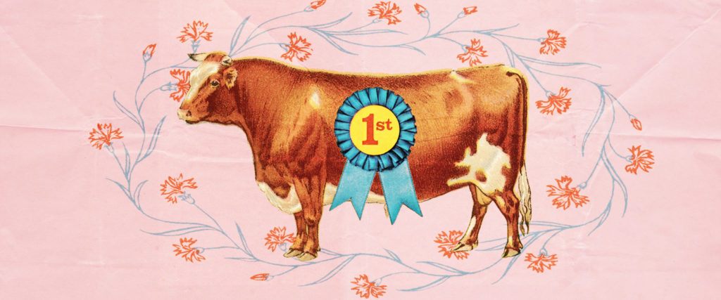Literal Cow Boys: The Men Who Keep Cows As Pets
