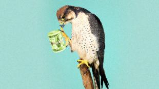 Falconwealth