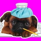 Sick_Pet_Office