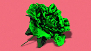 Expensive_Roses