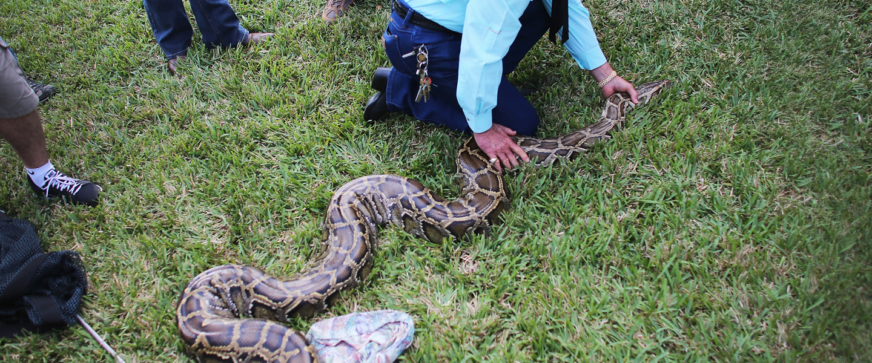 pythonhunters