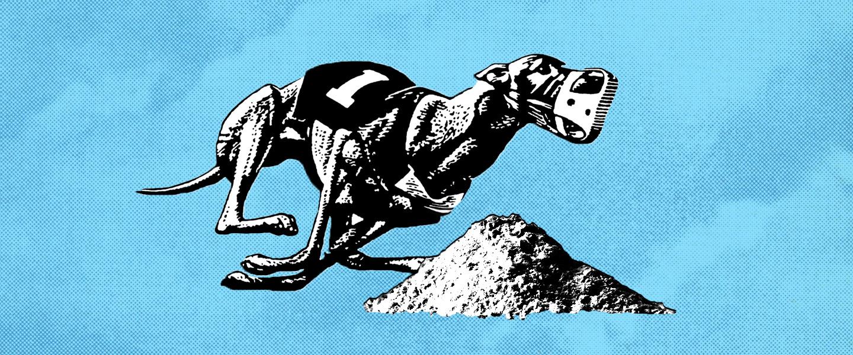 Greyhound_Cocaine