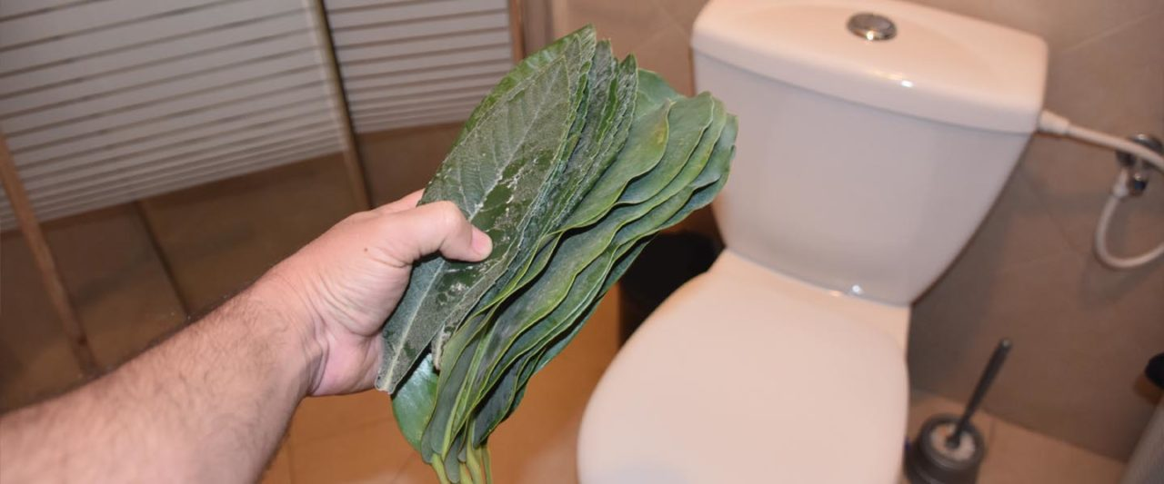 toilet_Paper_leaf_rock_sticks_newspaper