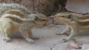 squirrel_crow_dog_fight_quarantine