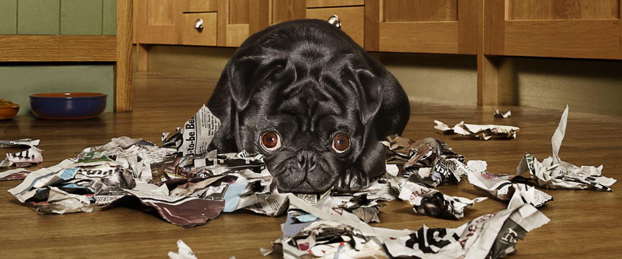 My_Dog_Is_Going_Apeshit_Quarantine