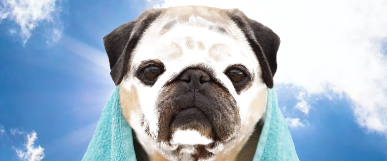 Putting Sunscreen on Your Pets