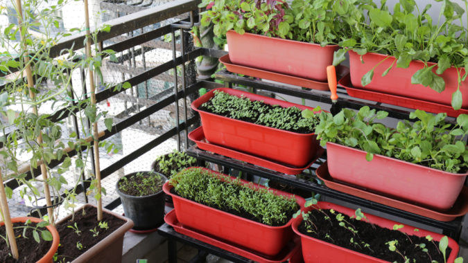 Summer's_Best_Fruits_Vegetables_Herbs_Grow_Small_Space
