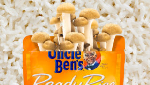 Uncle_Ben_Shrooms_Growing_DIY