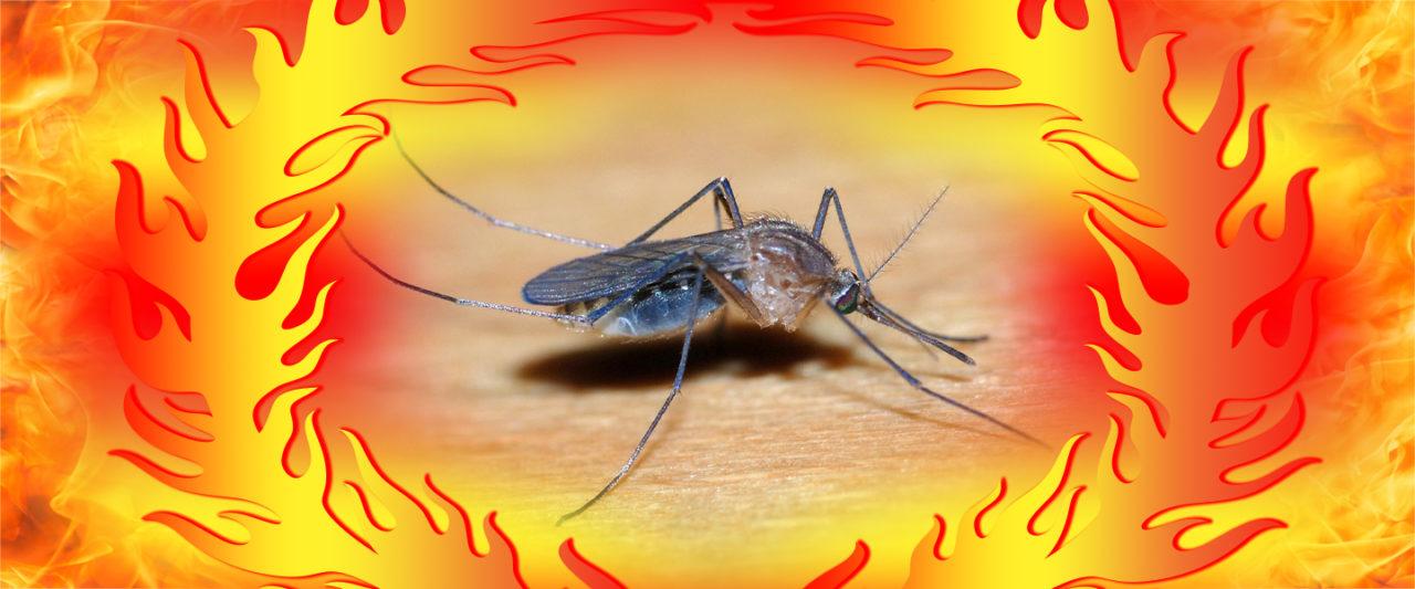 summerhottake_mosquito