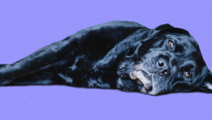 Can_Dogs_Have_Insomnia