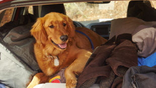 How_to_Road_Trip_with_a_Pet