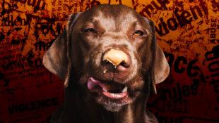 Origins_of_Peanut_Butter_Dog_Rumor