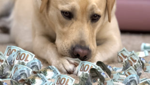 Why_We_Go_Into_Debt_for_Our_Pets