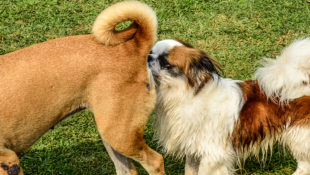 can_my_dog_play_with_other_dogs_during_coronavirus
