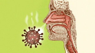 smell_corona_virus